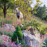 Award Winning Luxury Mountain Landscape Design & Construction, Boulder, CO